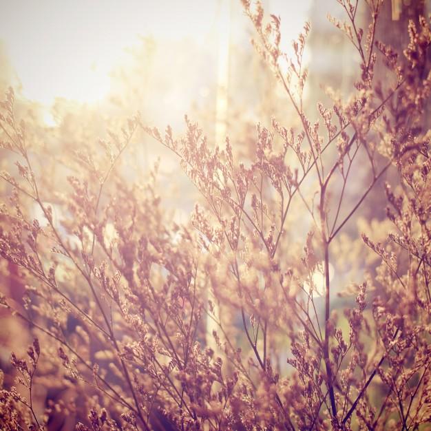 haveoraklet efterår