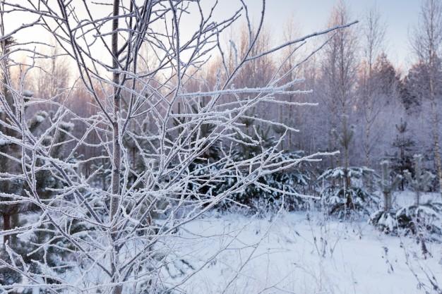 Vinterklar have