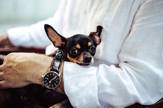 Hvis du har en lille hund, bør du bruge hundesele